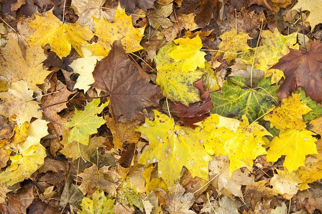 autumn-66702_6401